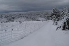 Nevada Viñas de la Mateba